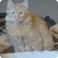 Adopt A Pet :: Sergio - Farmington, AR