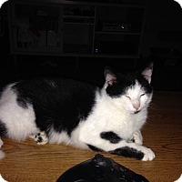 Adopt A Pet :: Mack - Fort Wayne, IN