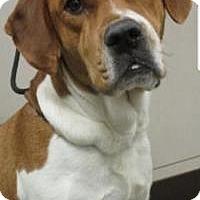 Adopt A Pet :: Rex - Union Grove, WI