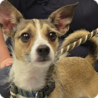 Adopt A Pet :: Perrito - Martinsville, IN