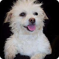 Adopt A Pet :: Ellie - Phelan, CA