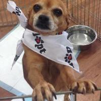 Adopt A Pet :: Griswold - Greensboro, NC
