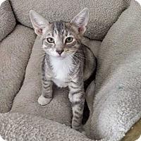 Adopt A Pet :: Marie - Margate, FL