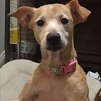 Adopt A Pet :: Gemma - Breaux Bridge, LA
