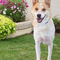 Adopt A Pet :: 632 Dandy - Aurora, CO