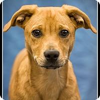 Adopt A Pet :: Lucky - Wickenburg, AZ