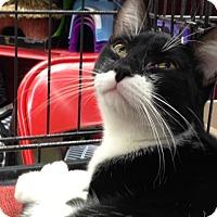 Adopt A Pet :: Tux - Redondo Beach, CA