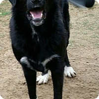 Adopt A Pet :: Samson - Byhalia, MS