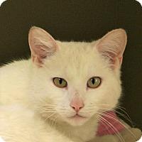 Adopt A Pet :: Chaz - Hastings, NE