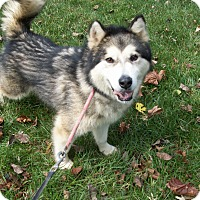 Adopt A Pet :: Kohl - Augusta County, VA