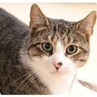 Adopt A Pet :: Amos (PS SB) - Trenton, NJ