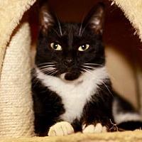 Adopt A Pet :: Marvin - Marlboro, NJ