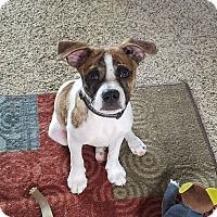 Adopt A Pet :: Sam - Winchester, VA