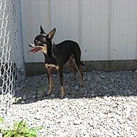 Adopt A Pet :: Pip - Port Clinton, OH