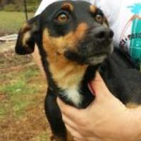 Adopt A Pet :: Lacey - Greensboro, NC