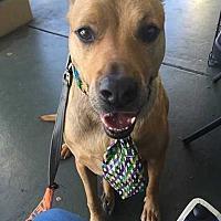 Adopt A Pet :: Tater B.* - Tampa, FL