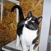 Adopt A Pet :: Bristol - Eldora, IA
