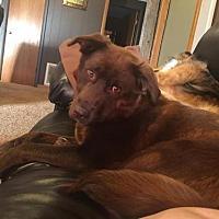 Adopt A Pet :: Nellie - Portland, IN