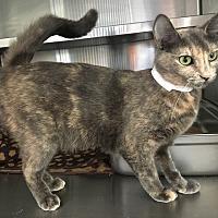 Adopt A Pet :: Lola - Oakdale, CA