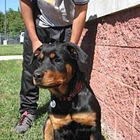 Adopt A Pet :: *ROYAL - Upper Marlboro, MD