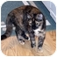 Photo 2 - Domestic Longhair Cat for adoption in Troy, Michigan - Angela & Sissy