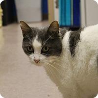 Adopt A Pet :: Mr. Moo - Chesapeake, VA