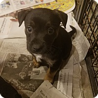 Adopt A Pet :: Jan*ADOPTED!!* - Chicago, IL