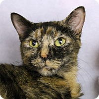 Adopt A Pet :: Fritzie - Chicago, IL