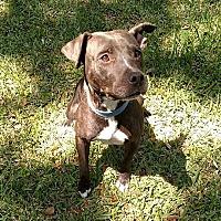 Adopt A Pet :: Mama - Lake Pansoffkee, FL