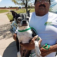 Adopt A Pet :: Otis - Weatherford, TX