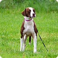 Adopt A Pet :: Thelma - Lebanon, MO