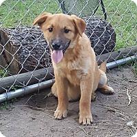 Adopt A Pet :: Shroeder - Dublin, GA