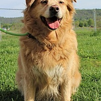 Adopt A Pet :: Zoey - Capon Bridge, WV