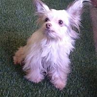 Adopt A Pet :: Darla - Temecula, CA
