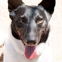 Adopt A Pet :: DILLON - Marble Falls, TX