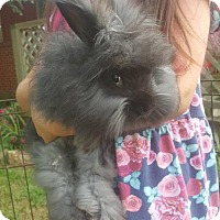 Adopt A Pet :: Ed - Allentown, PA