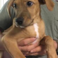 Adopt A Pet :: Peggy - Dothan, AL