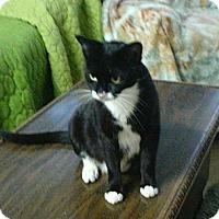 Adopt A Pet :: Savannah - Orlando, FL