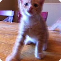 Adopt A Pet :: FLAME - Phoenix, AZ