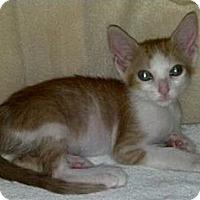 Adopt A Pet :: Lucy Ball - Phoenix, AZ
