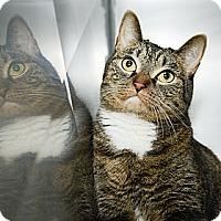 Adopt A Pet :: Karen - New York, NY