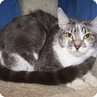 Adopt A Pet :: K-Hannah3-Harper - Colorado Springs, CO