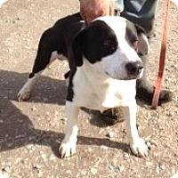 Adopt A Pet :: Barney - Moulton, AL