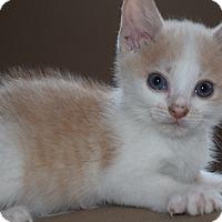 Adopt A Pet :: Jake - Byron Center, MI