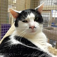 Adopt A Pet :: Geri - Wilmington, DE