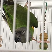 Adopt A Pet :: Sunshine & Peaches - Punta Gorda, FL