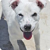 Adopt A Pet :: Herbie H. - Cranston, RI