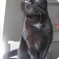 Adopt A Pet :: Blurdy - Waupaca, WI