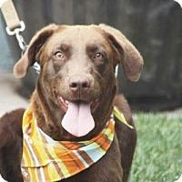Adopt A Pet :: DARBY - BELL GARDENS, CA