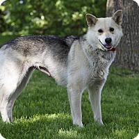 Adopt A Pet :: Renarde - Ile-Perrot, QC